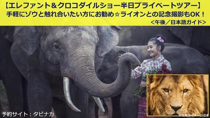 バンコク 象乗り ツアー