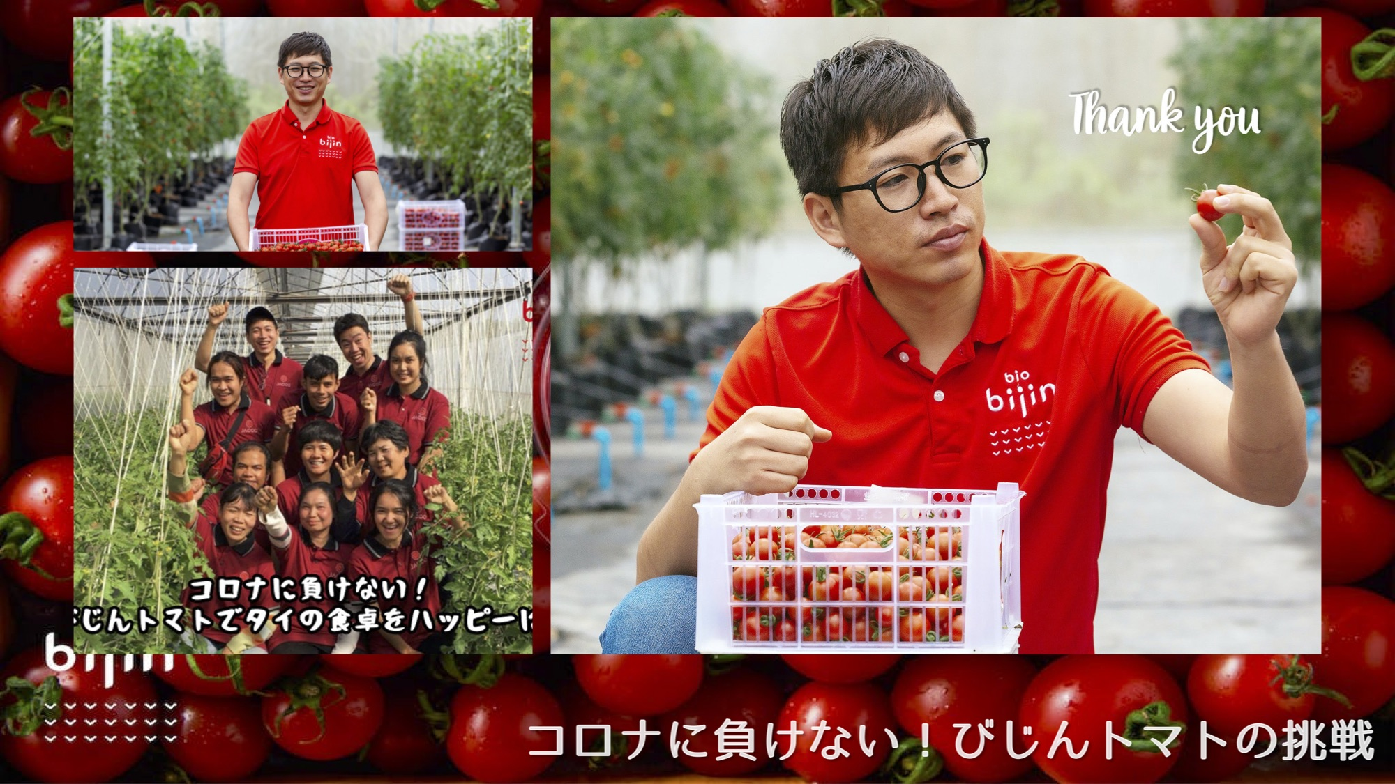 びじんトマト