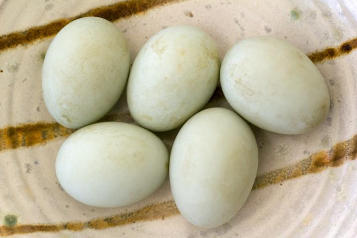 タイ アヒル 卵